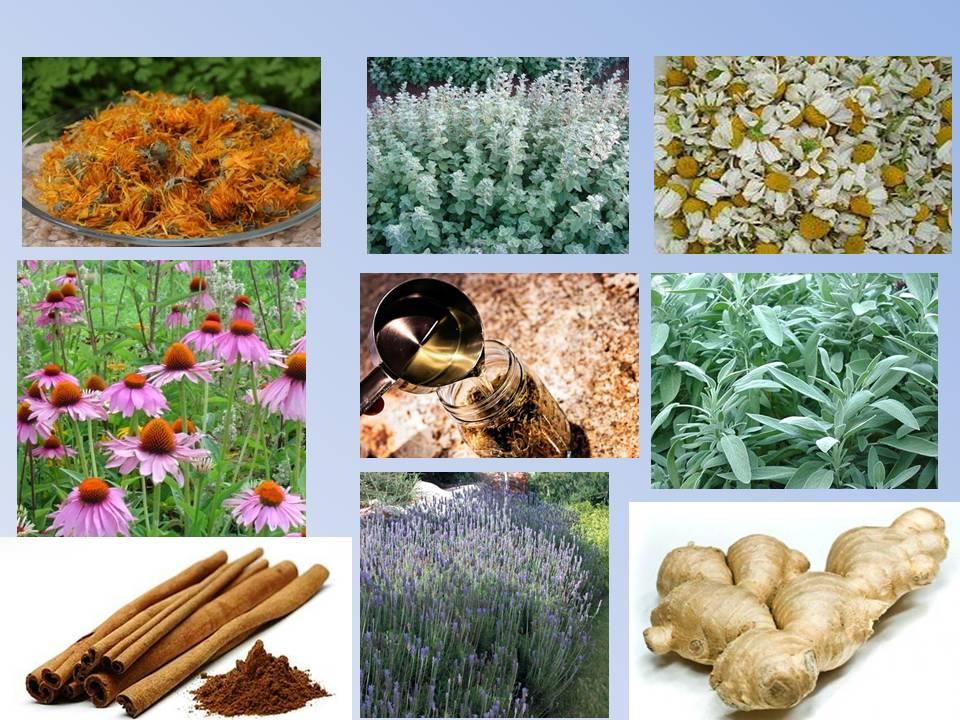 סדנת צמחי  מרפא