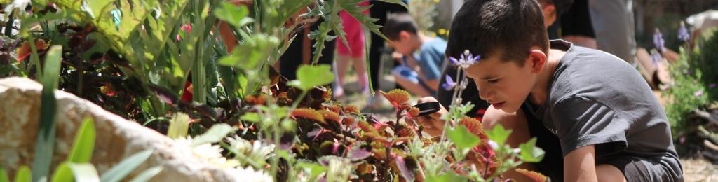 פעילות לילדים - חוקרים את הסביבה