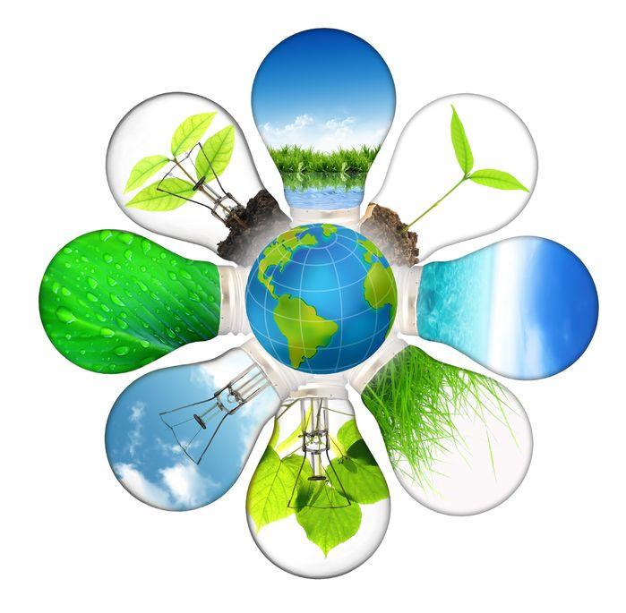 קיימות, איכות סביבה, פעילויות ירוקות, פעילויות איכות סביבה, קיר ירוק, פרמקלצ'ר, לחשוב מחוץ לקופסא, בר קיימא